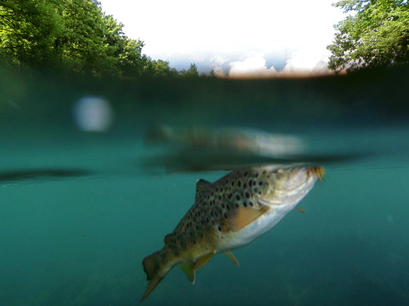 Fotografije ulova, ribe, oprema i dr. 2mg8v110