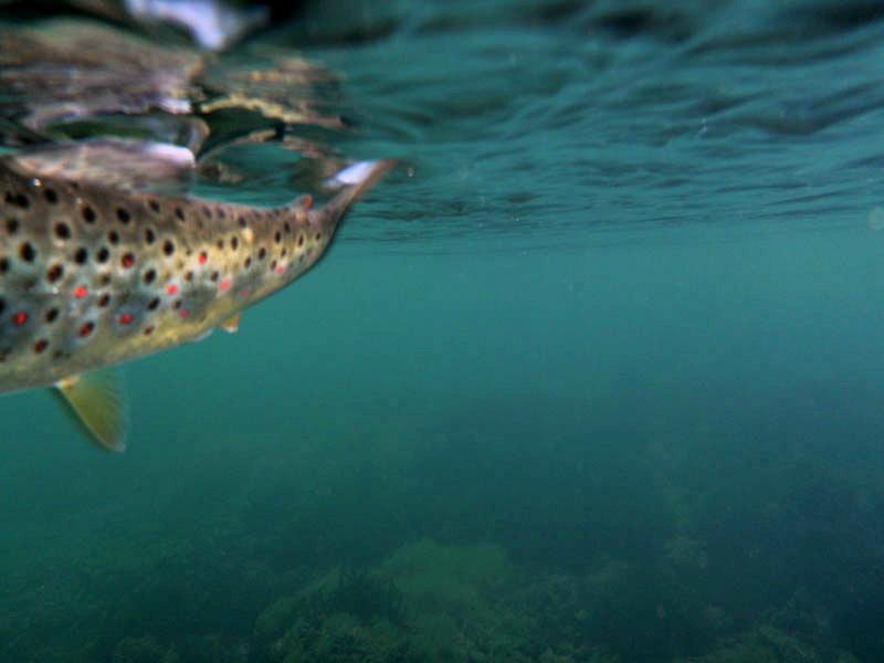 Fotografije ulova, ribe, oprema i dr. 317bh510