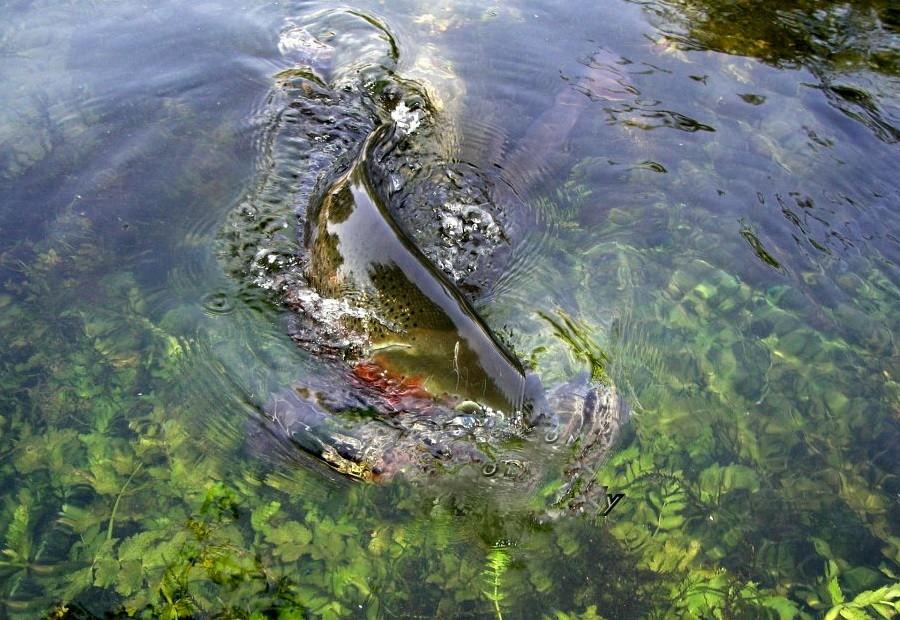 Fotografije ulova, ribe, oprema i dr. 39038110