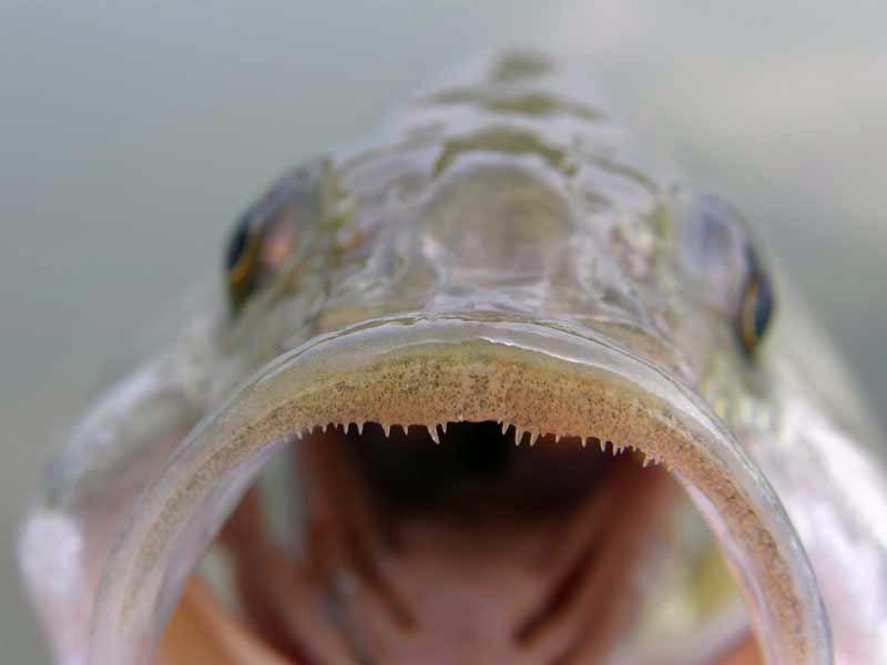 Fotografije ulova, ribe, oprema i dr. P4260013