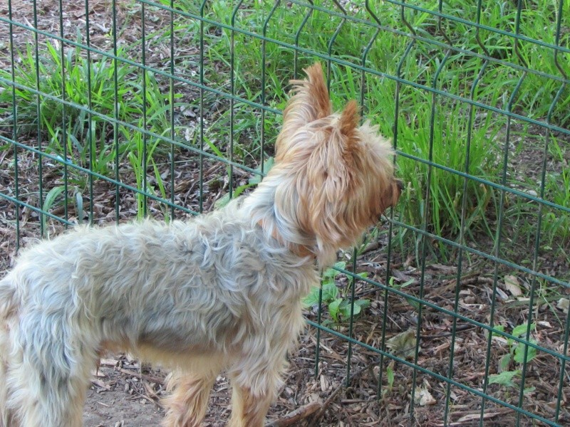 SOPRANO (chien) 01913