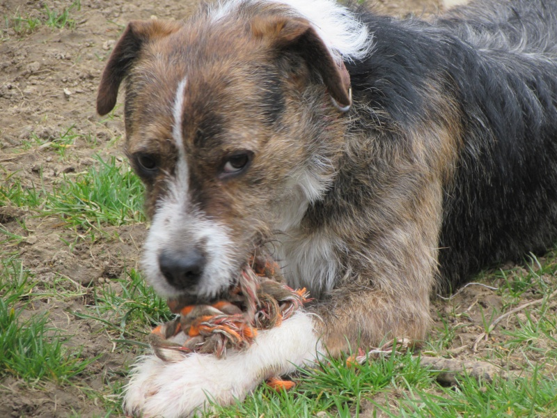BILL le chien Img_4526