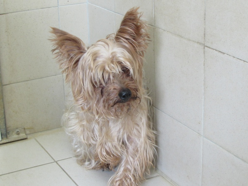 SOPRANO (chien) Img_4735