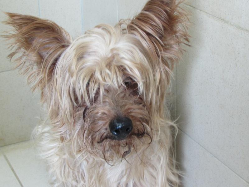 SOPRANO (chien) Img_4736