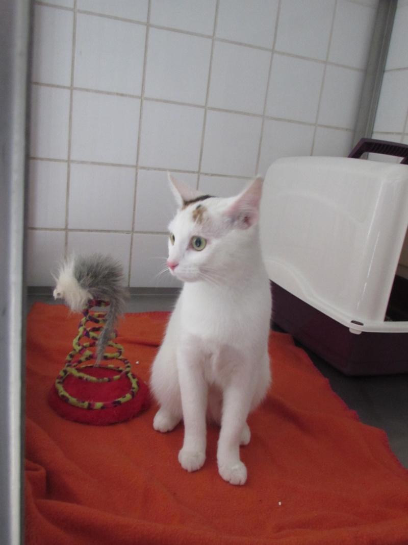 Réservation de LINOTTE et adoption-Avril 2015 Img_4748