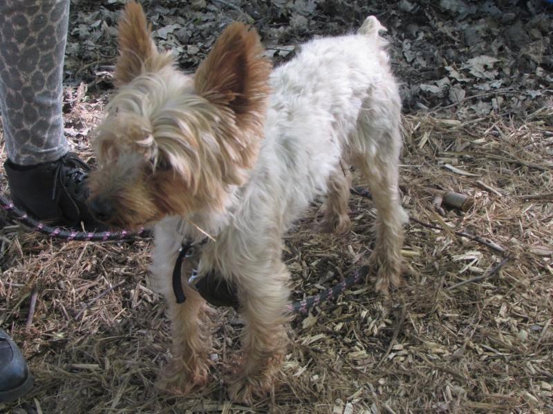 SOPRANO (chien) Img_4926
