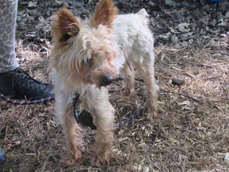 SOPRANO (chien) Img_4927