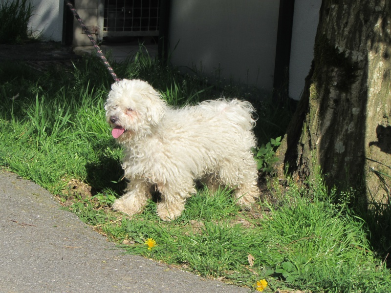 POOPY (chien) Img_4930