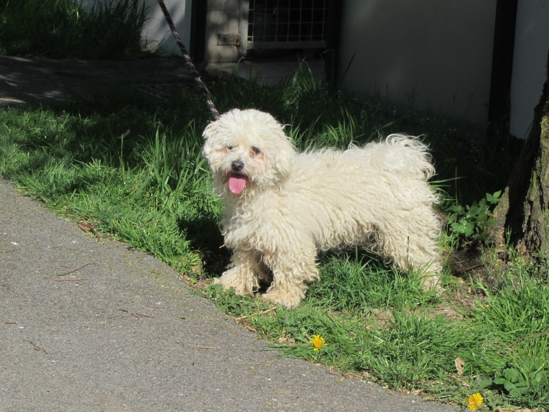 POOPY (chien) Img_4931