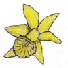 Article Fleur Jonqui10