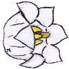 Article Fleur Muguet10