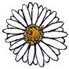 Article Fleur Pyquer10