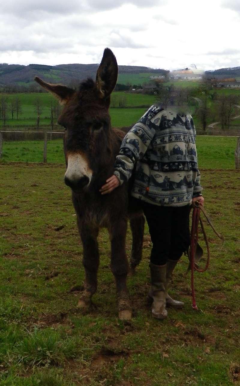 BOURRIFEE, renommée JOSETTE  - ONC âne née en 2010 - adoptée en août 2011 par Stephele12 - Page 3 Imgp3710