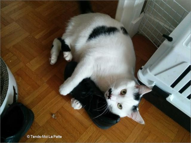 CHAT A ADOPTER : HALLY - chat mâle de 5 ans Image112