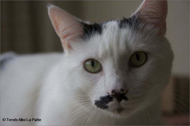 CHAT A ADOPTER : HALLY - chat mâle de 5 ans Image113