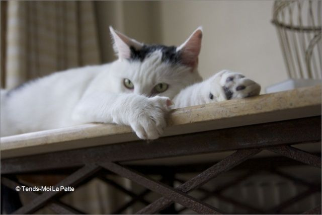 CHAT A ADOPTER : HALLY - chat mâle de 5 ans Image313