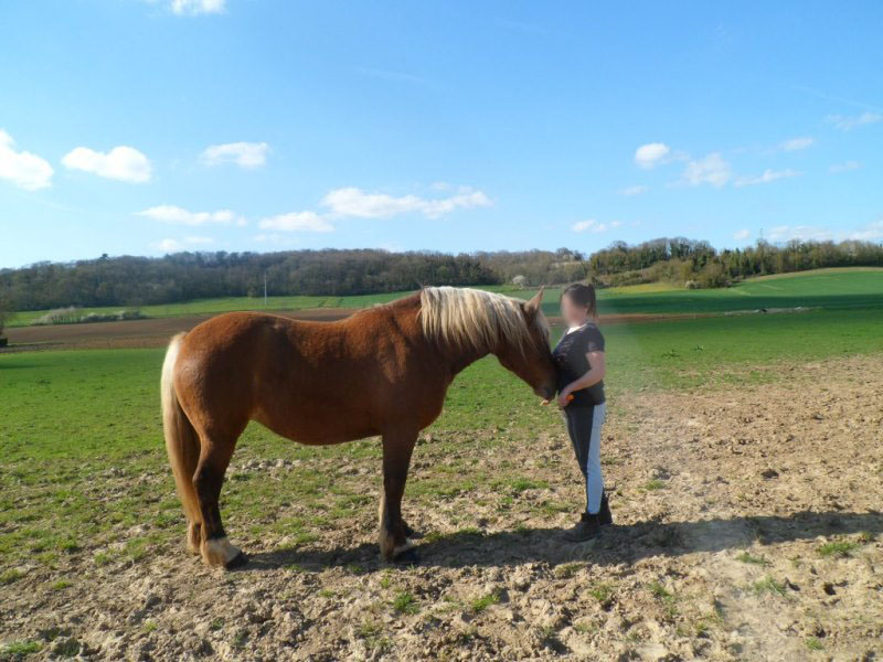 SAGESSE - Trait Comtois née en 2006 - adoptée en juin 2011 par Gabrielle Sagess30