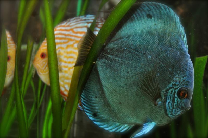 aquarium 500L Dsc_0011