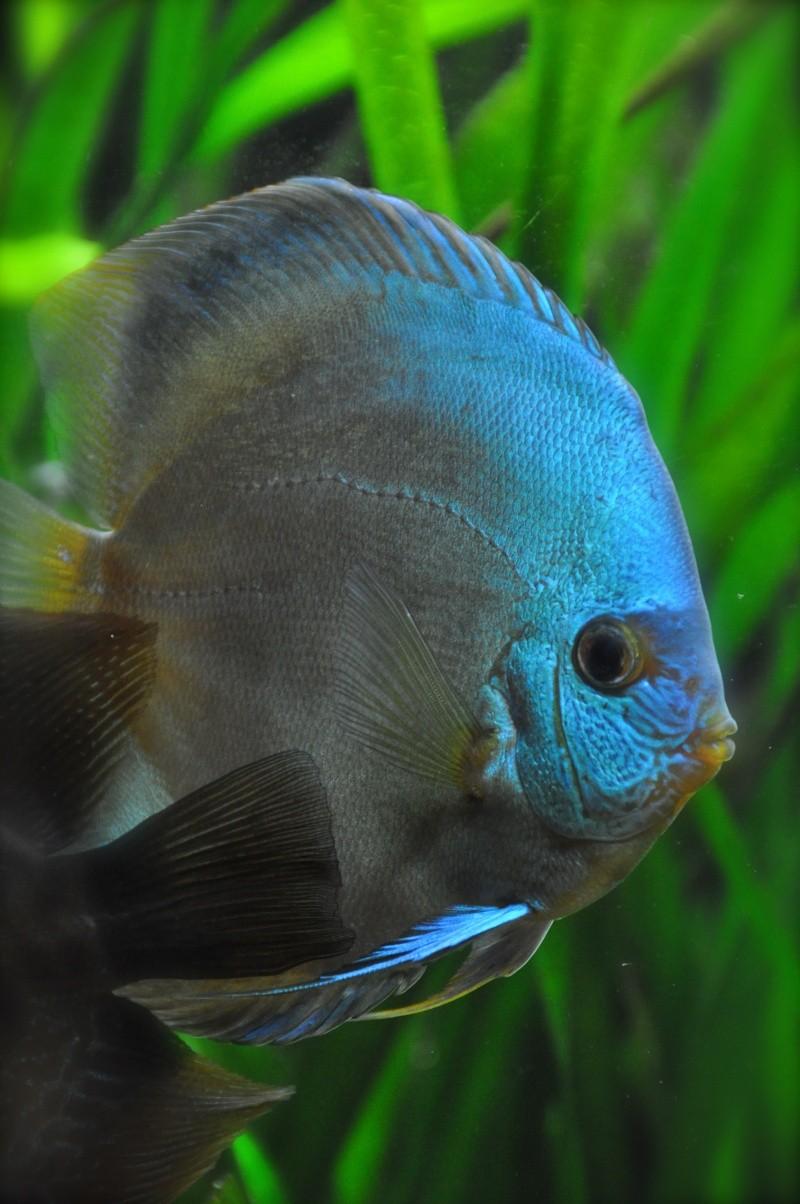 aquarium 500L Dsc_0111