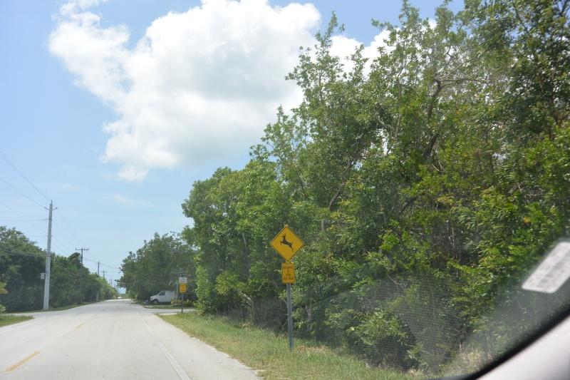 Le merveilleux voyage en Floride de Brenda et Rebecca en Juillet 2014 - Page 18 2815