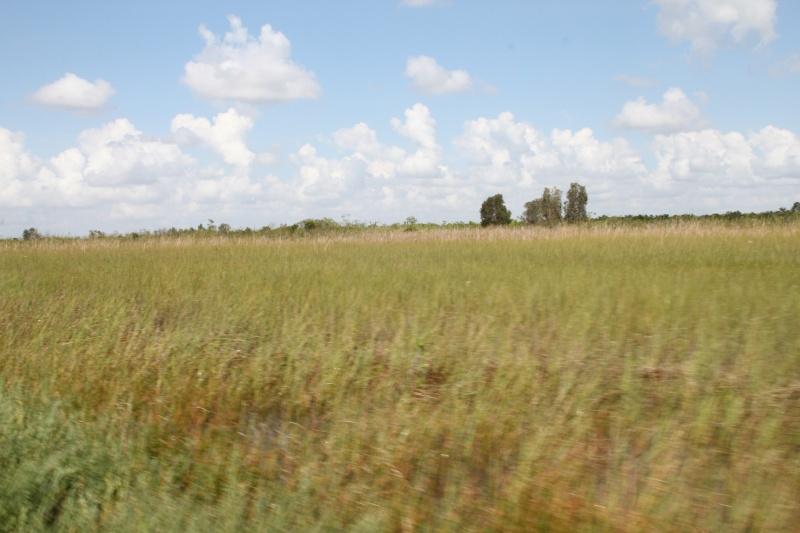 Le merveilleux voyage en Floride de Brenda et Rebecca en Juillet 2014 - Page 18 2916