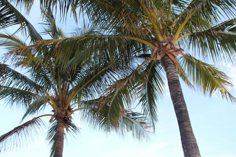 Le merveilleux voyage en Floride de Brenda et Rebecca en Juillet 2014 - Page 16 3111