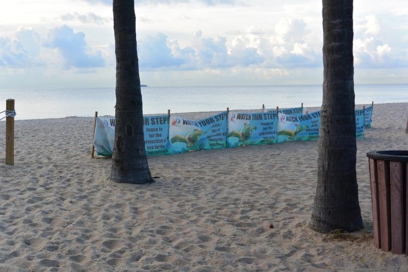 Le merveilleux voyage en Floride de Brenda et Rebecca en Juillet 2014 - Page 16 3411