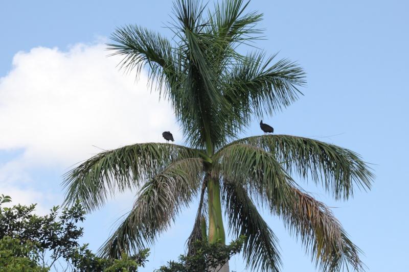 Le merveilleux voyage en Floride de Brenda et Rebecca en Juillet 2014 - Page 18 4016