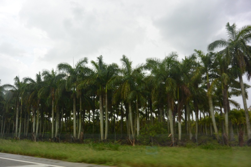 Le merveilleux voyage en Floride de Brenda et Rebecca en Juillet 2014 - Page 18 5714