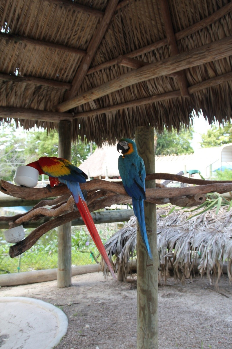 Le merveilleux voyage en Floride de Brenda et Rebecca en Juillet 2014 - Page 18 5815