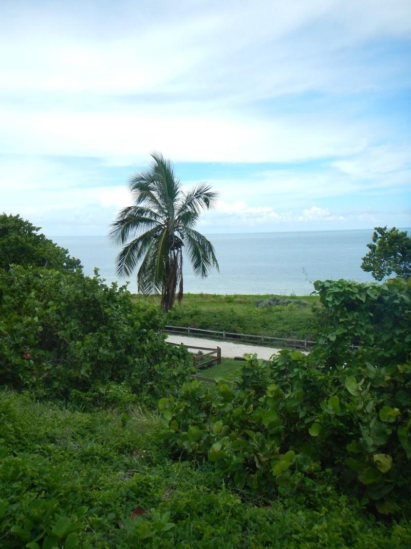 Le merveilleux voyage en Floride de Brenda et Rebecca en Juillet 2014 - Page 16 6312