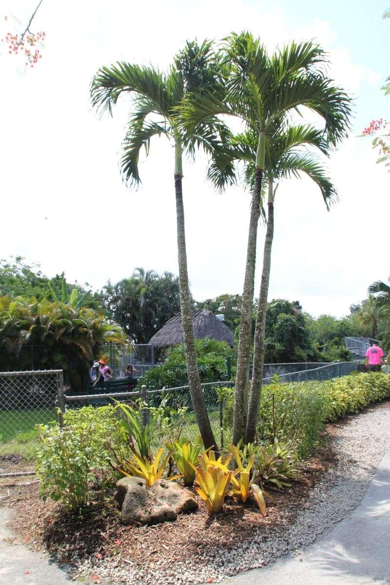 Le merveilleux voyage en Floride de Brenda et Rebecca en Juillet 2014 - Page 18 6515
