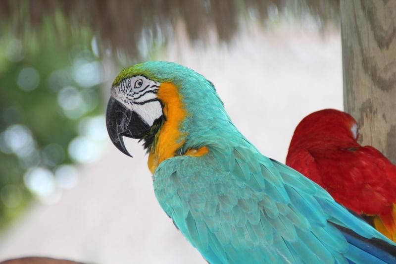 Le merveilleux voyage en Floride de Brenda et Rebecca en Juillet 2014 - Page 18 6616