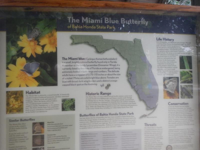 Le merveilleux voyage en Floride de Brenda et Rebecca en Juillet 2014 - Page 16 6811