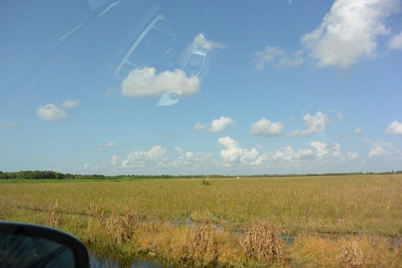 Le merveilleux voyage en Floride de Brenda et Rebecca en Juillet 2014 - Page 18 816