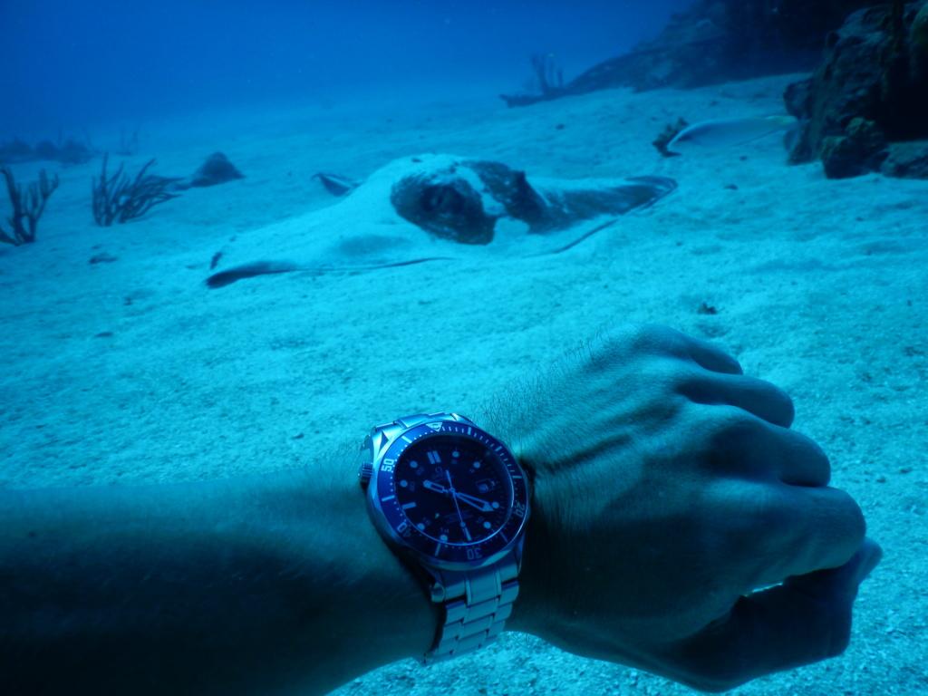 [aide au choix] Diver GMT Dscn1210