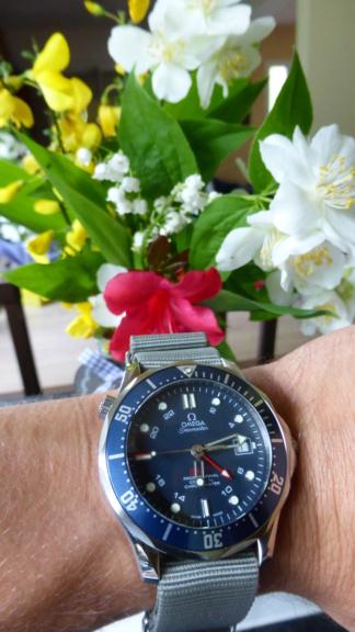 [aide au choix] Diver GMT P1010624