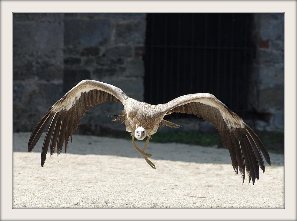 Visite au parc Pairi Daiza (Belgique) 1-1-hn37