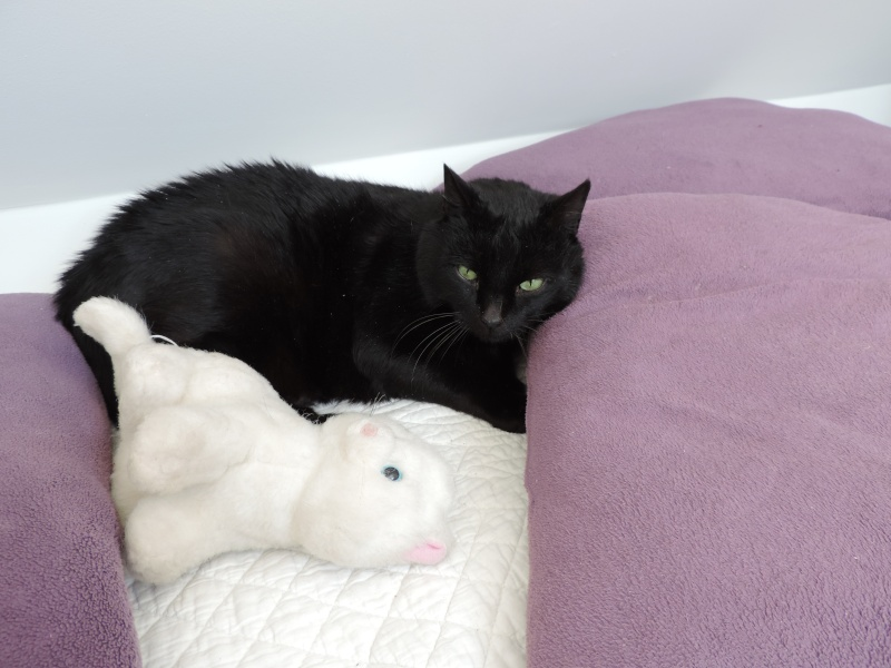 AKTARUS, mâle européen noir, né en 2005 Dscn2011