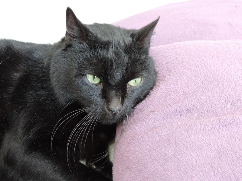AKTARUS, mâle européen noir, né en 2005 Dscn2012