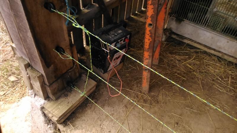 Présentation de l'élevage de Boris54  Installations fini  !  - Page 15 Dsc_0111