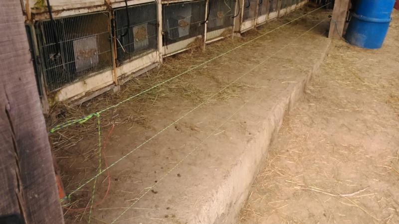 Présentation de l'élevage de Boris54  Installations fini  !  - Page 15 Dsc_0112