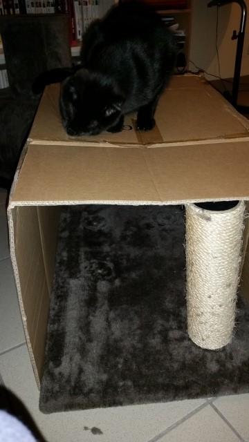 panier animaux fait maison Etape_11