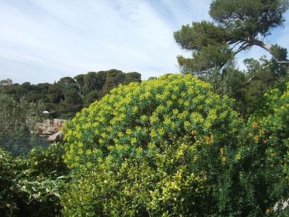 (06) Cap d'Antibes et parc de la Villa Eilenroc Dscf5624