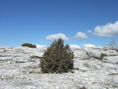 Massif de la Sainte-Baume (13 et 83)  Dscf5848