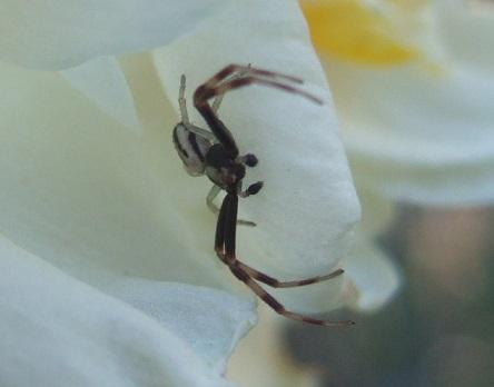 les 8 pattes - araignées et compagnie - Page 19 Dscf5920