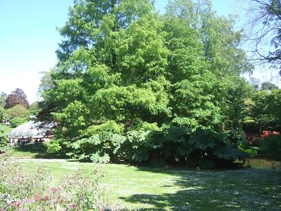 (44) Jardin des plantes - Nantes Dscf6220