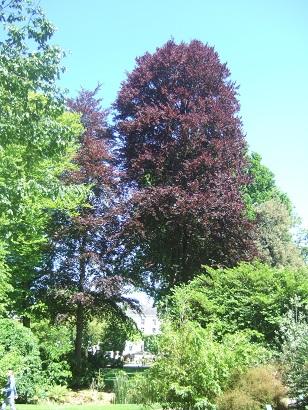 (44) Jardin des plantes - Nantes Dscf6324