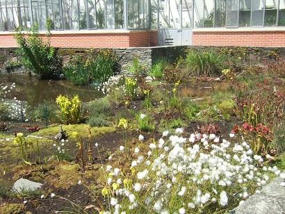 (44) Jardin des plantes - Nantes Dscf6325