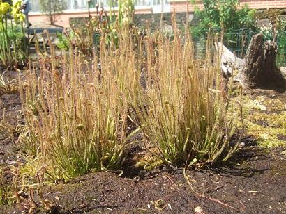 (44) Jardin des plantes - Nantes Dscf6327